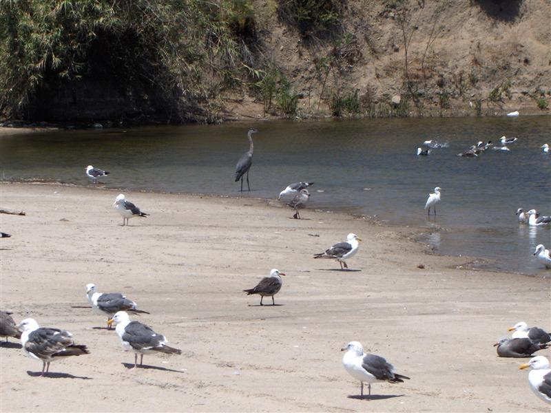 Usa Parchi dell'ovest, Malibu, La laguna di Malibù
