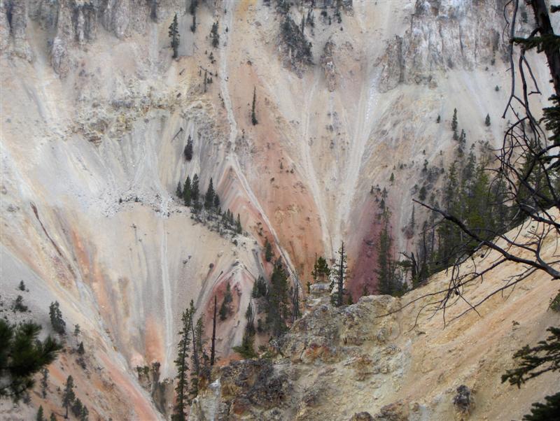 Usa Parchi dell'ovest, Grandi parchi americani, Yellowstone National Park, Particolare dell'Artist Point